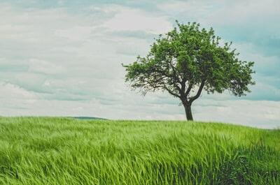 木と空の画像