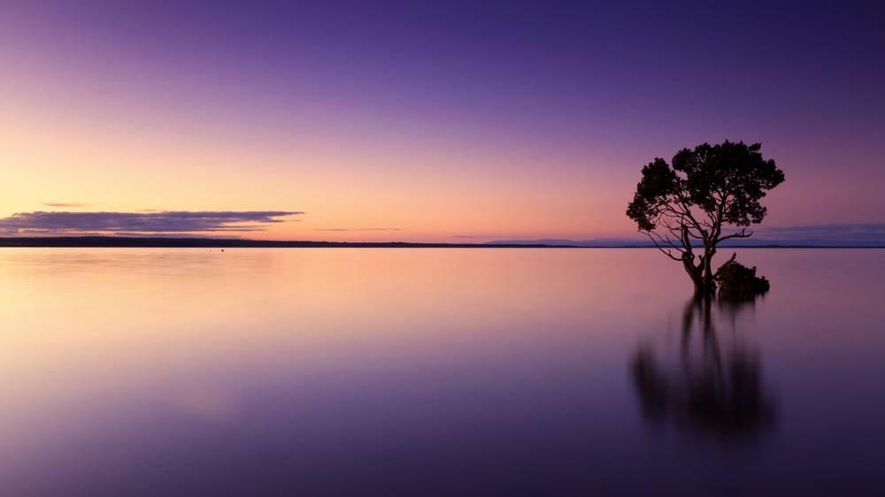 木と海の画像